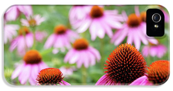 Coneflowers IPhone 5 Case by David Chandler