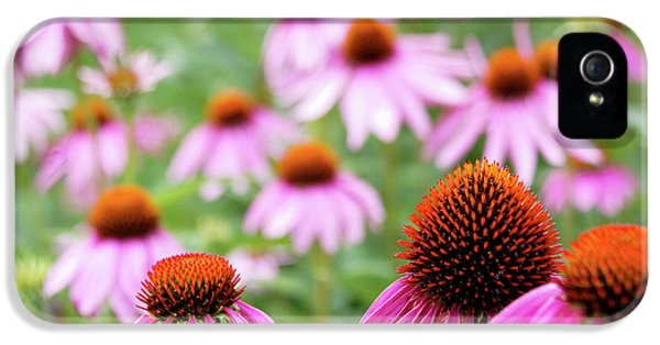 IPhone 5 Case featuring the photograph Coneflowers by David Chandler