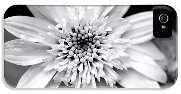 IPhone 5 Case featuring the photograph Coreopsis Flower Black And White by Christina Rollo