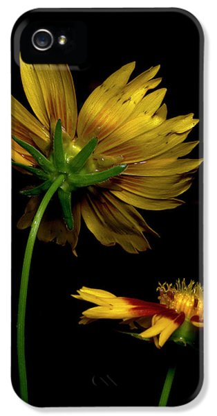 Coreopsis Tickseed IPhone 5 Case by Richard Rizzo
