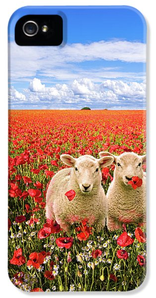 Meadow iPhone 5 Cases - Corn Poppies And Twin Lambs iPhone 5 Case by Meirion Matthias