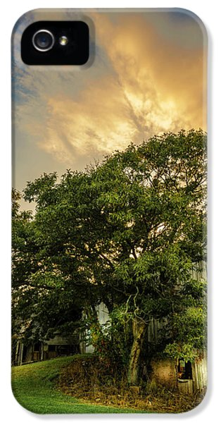 Corner Oak IPhone 5 Case by Marvin Spates