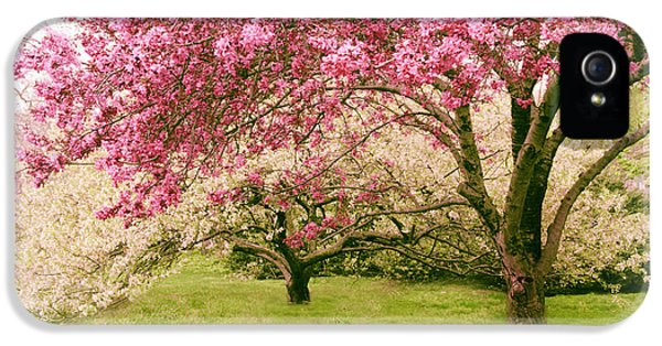 IPhone 5 Case featuring the photograph Crabapple Confection by Jessica Jenney