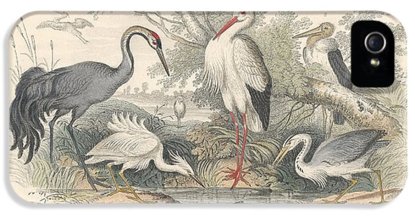 Cranes IPhone 5 / 5s Case by Anton Oreshkin