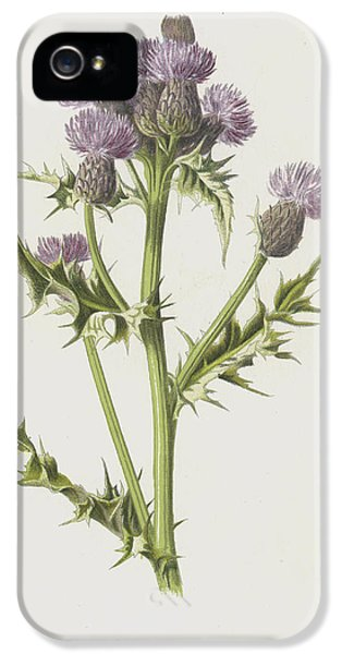 Creeping Thistle IPhone 5 Case