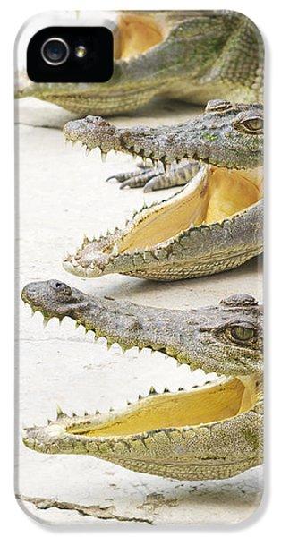 Crocodile Choir IPhone 5 Case by Jorgo Photography - Wall Art Gallery