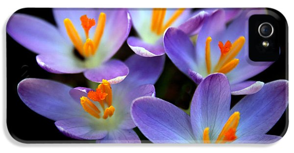 IPhone 5 Case featuring the photograph Crocus Aglow by Jessica Jenney