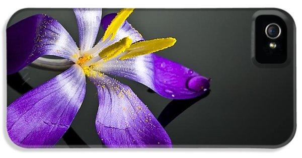 Crocus IPhone 5 Case by Svetlana Sewell