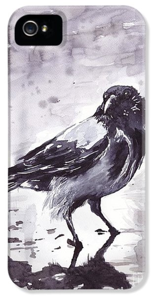 Falcon iPhone 5 Case - Crow Watercolor by Suzann's Art