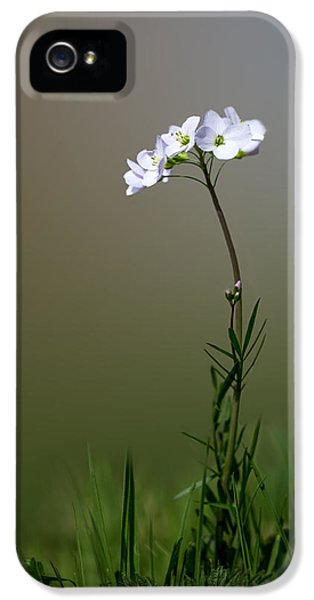 Cuckoo Flower IPhone 5 Case by Ian Hufton
