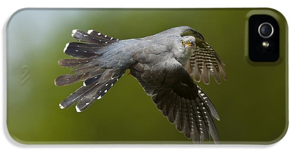 Cuckoo Flying IPhone 5 Case by Steen Drozd Lund