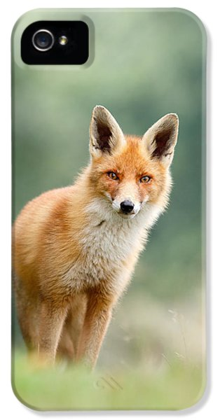 Curious Fox IPhone 5 Case