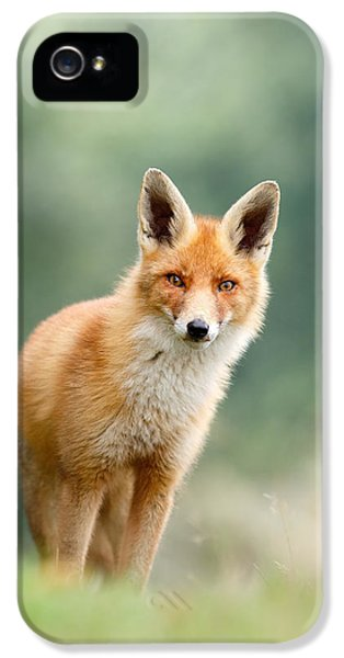 Curious Fox IPhone 5 Case by Roeselien Raimond