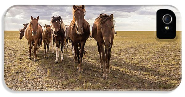 IPhone 5 Case featuring the photograph Curious Horses by Hitendra SINKAR