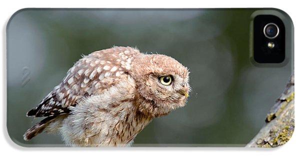 Cute Little Owlet IPhone 5 Case by Roeselien Raimond