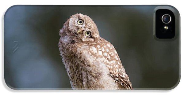 Cute, Moi? - Baby Little Owl IPhone 5 Case by Roeselien Raimond