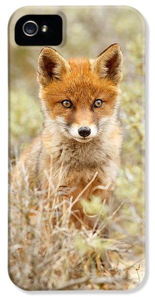 Cute Red Fox Kit IPhone 5 Case by Roeselien Raimond