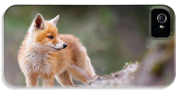 Cute Red Fox IPhone 5 Case