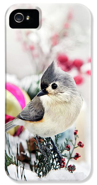 Cute Winter Bird - Tufted Titmouse IPhone 5 Case by Christina Rollo