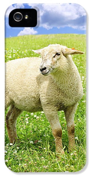 Livestock iPhone 5 Cases - Cute young sheep iPhone 5 Case by Elena Elisseeva