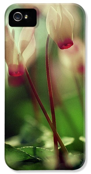 Cyclamens IPhone 5 Case by Dubi Roman