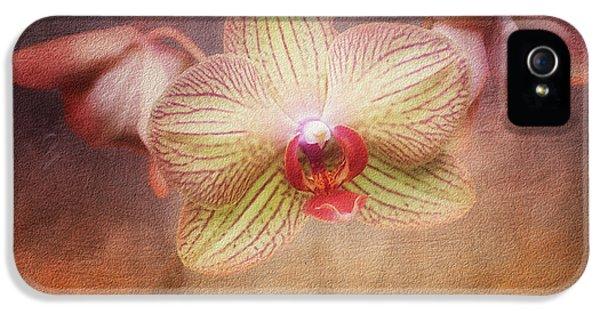 Orchid iPhone 5 Case - Cymbidium Orchid by Tom Mc Nemar