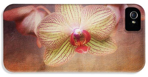 Cymbidium Orchid IPhone 5 Case by Tom Mc Nemar