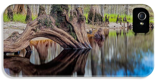 Cypress Knee In Fisheating Creek IPhone 5 Case by Andres Leon