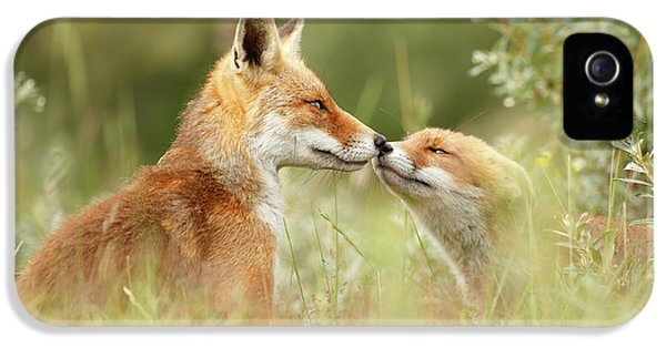 Daddy's Girl - Red Fox Father And Its Young Fox Kit IPhone 5 Case by Roeselien Raimond