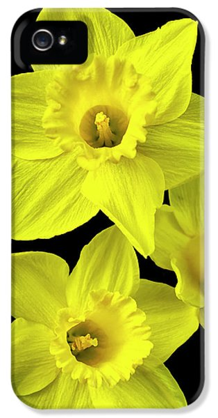 IPhone 5 Case featuring the photograph Daffodils by Christina Rollo