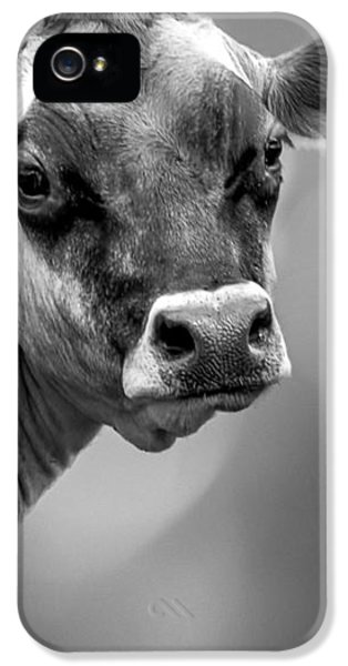 Dairy Cow Elsie IPhone 5 Case