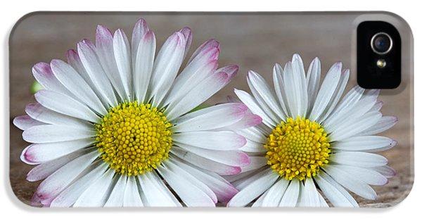 Daisy iPhone 5 Case - Daisy Flowers by Nailia Schwarz