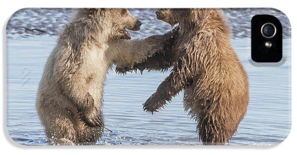 Dancing Bears IPhone 5 / 5s Case by Chris Scroggins