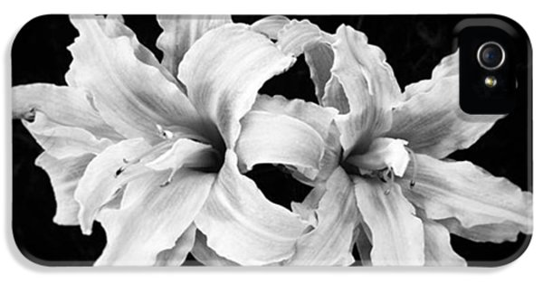 Day Lilies #noir #iphoneonly #iphone6 IPhone 5 Case by Joan McCool