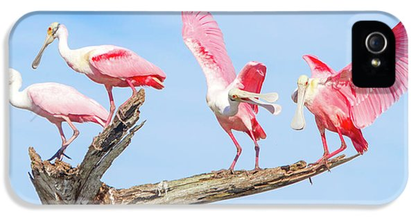 Day Of The Spoonbill  IPhone 5 Case by Mark Andrew Thomas