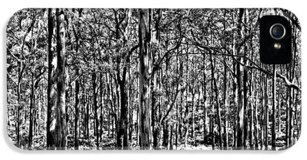 Deep Forest Bw IPhone 5 Case by Az Jackson