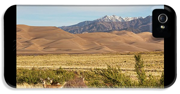 IPhone 5 Case featuring the photograph Deer And The Colorado Sand Dunes by James BO Insogna