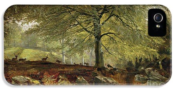 Deer In A Wood IPhone 5 Case by Joseph Adam