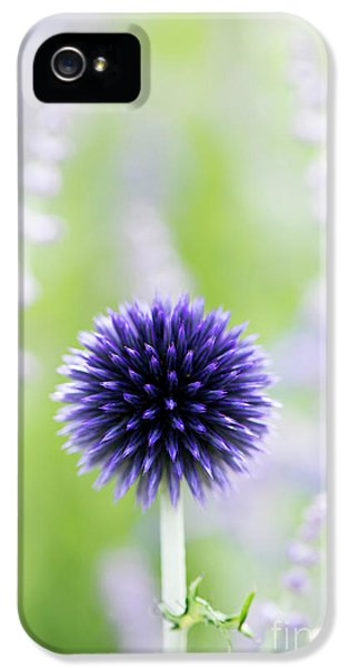 Delicate Globe Thistle  IPhone 5 Case by Tim Gainey
