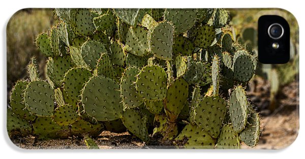 Desert Prickly-pear No6 IPhone 5 Case by Mark Myhaver