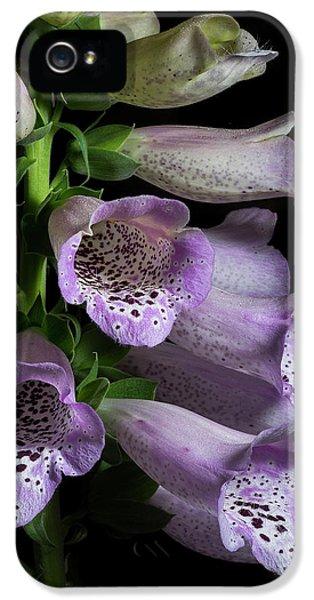 Digitalis Purpurea IPhone 5 Case by Richard Rizzo