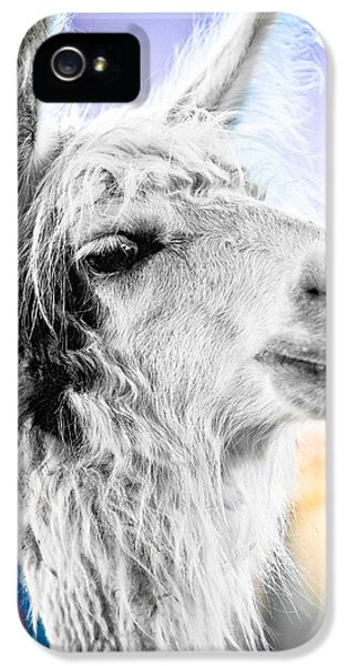 Dirtbag Llama IPhone 5 / 5s Case by TC Morgan