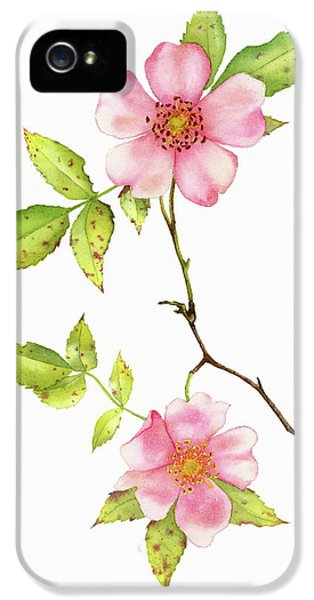 Dog Rose Watercolor IPhone 5 Case