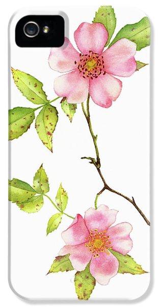 Dog Rose Watercolor IPhone 5 Case by Taylan Apukovska