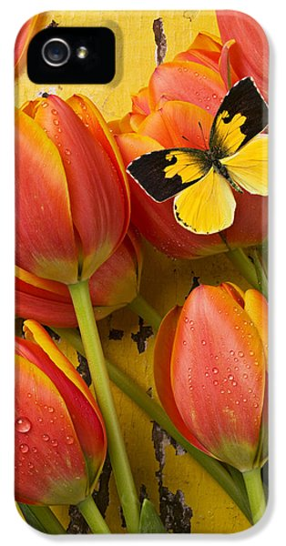 Dogface Butterfly And Tulips IPhone 5 Case by Garry Gay