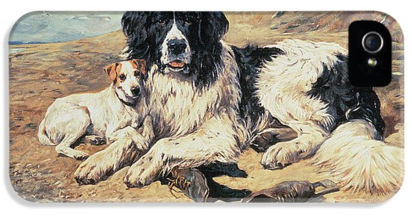 Dogs Watching Bathers IPhone 5 Case by John Emms
