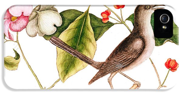 Dogwood  Cornus Florida, And Mocking Bird  IPhone 5 Case by Mark Catesby