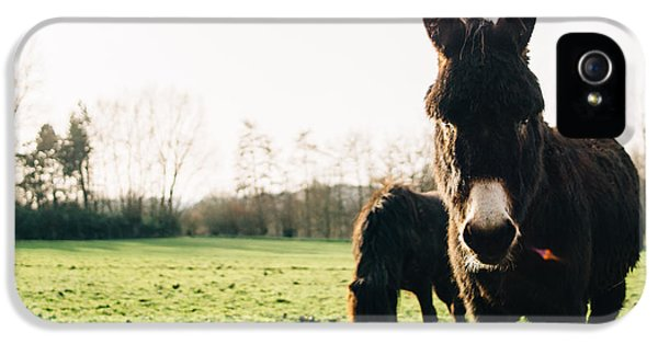 Donkey And Pony IPhone 5 Case by Pati Photography