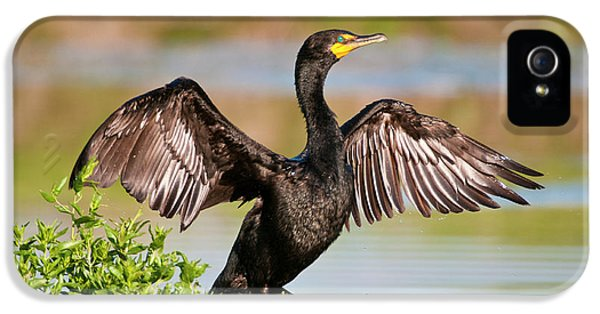 Double-crested Cormorant IPhone 5 Case by Gary Lengyel