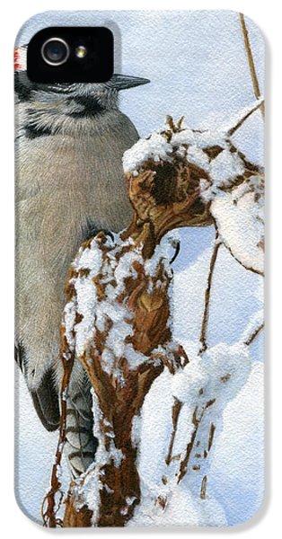 Downy Woodpecker  IPhone 5 / 5s Case by Ken Everett